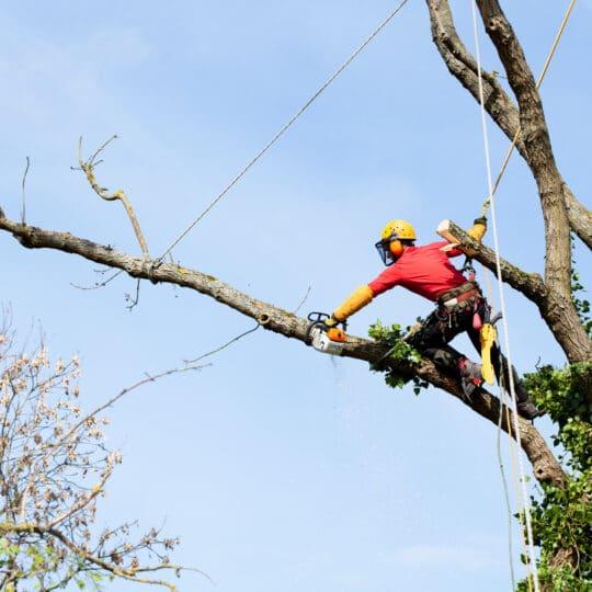 Stop Tree Pruning