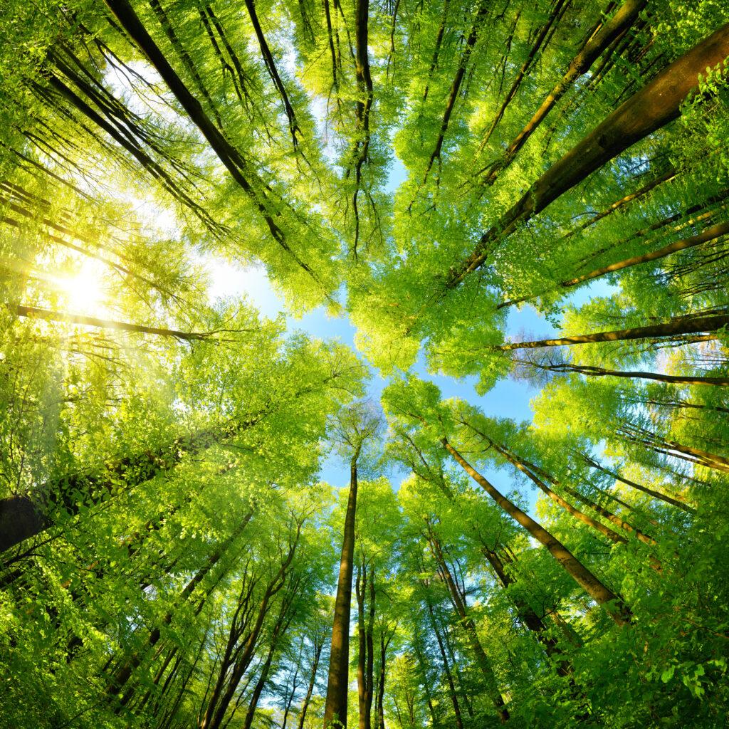 Arbor Day Blog • Tree Care & Planting
