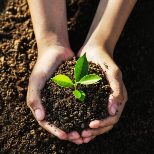 Plant Appreciation Post
